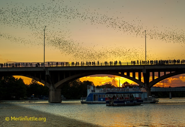 Tourists watching bats